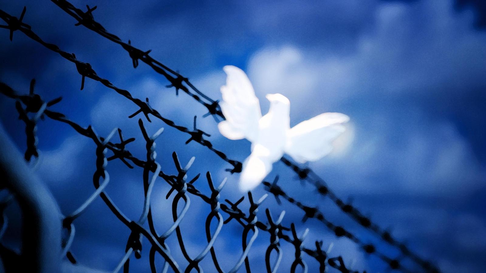 Hope for a future of peace