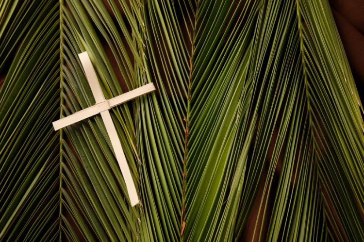 Palm Parade